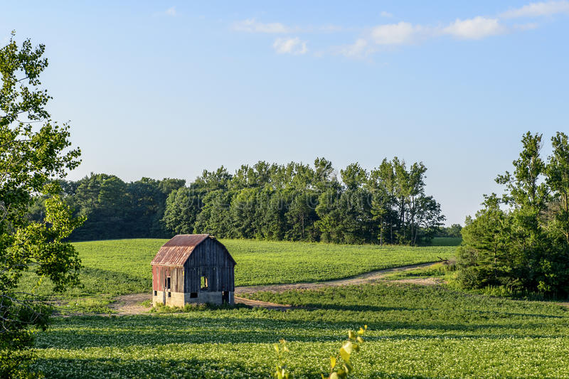 Old red barn on green farmers field. Old red and brown bard on green grassy farmers field with trees on horizon royalty free stock photos