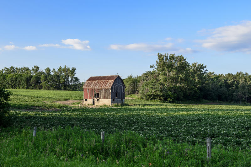 Old red barn on green farmers field. Old red and brown barn on green grassy and treed farmers field royalty free stock photo