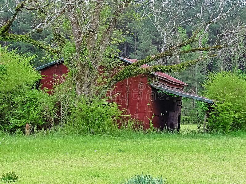Old red barn with old pecan trees growing around stock images