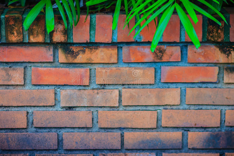 Old red brick wall with natural green leaves frame. Green palm l royalty free stock images
