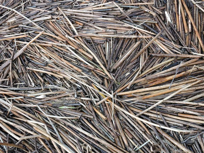 Old reed plant pieces near lake royalty free stock images