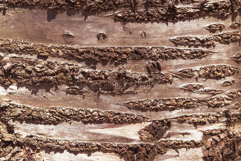 Old Rich Wood Texture. Cherry background stock image