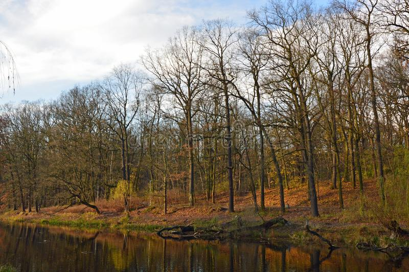 Old river in the park reflecting trees during last sunny days of fall. Old river in the park reflecting the colorful grass and naked trees during last sunny stock photos