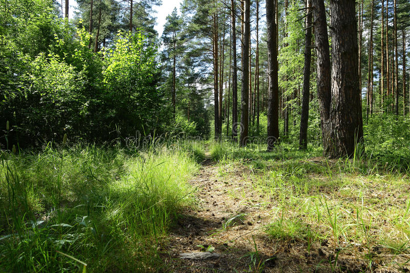 Old road in the middle of a forest in Sunny day stock photo