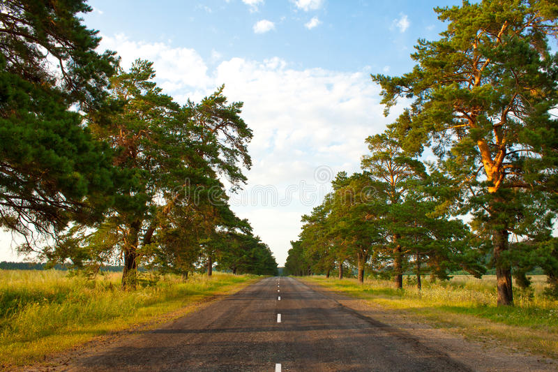 Download Old Road In The Middle Of An Pine Park Stock Photo - Image: 24418348