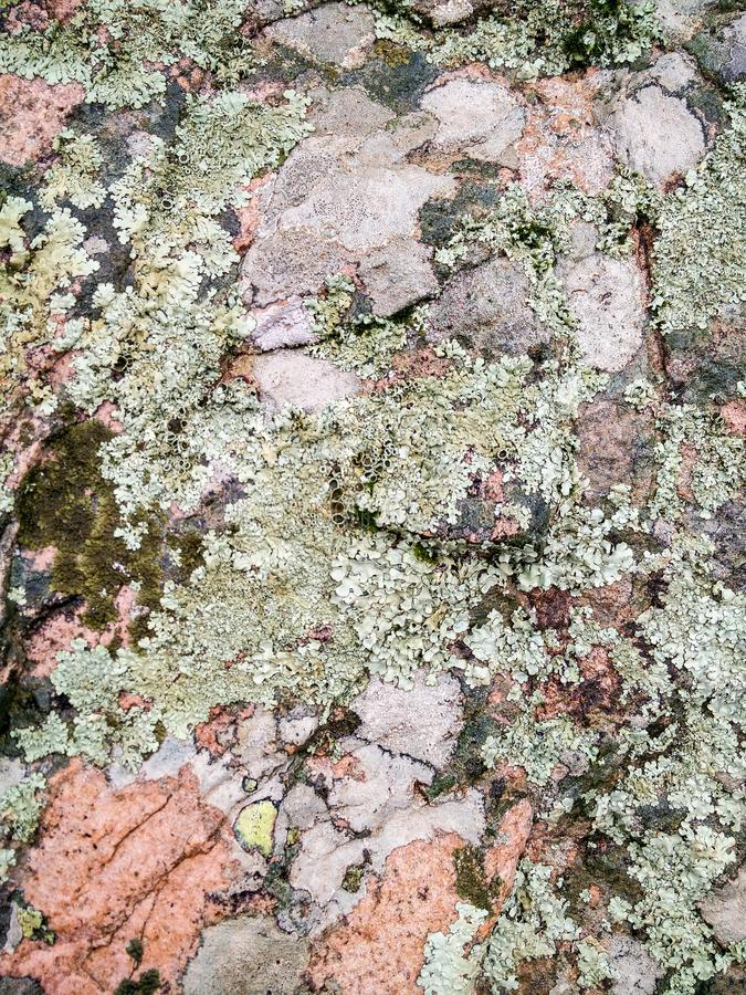 Sardinia. Natural environment. Volcanic rocks. Old rock colonized by ancient lichens and moss stock images