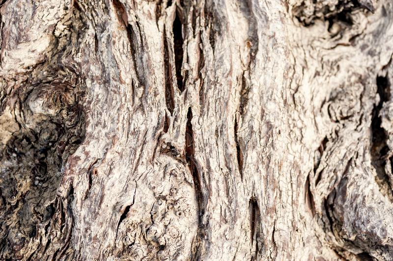Old rotten tree stump or trunk bark rotten after ages close up selective focus background stock image