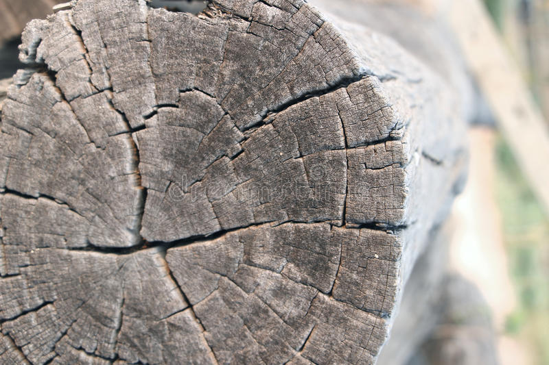 Old rough wood texture. Wooden texture. royalty free stock images