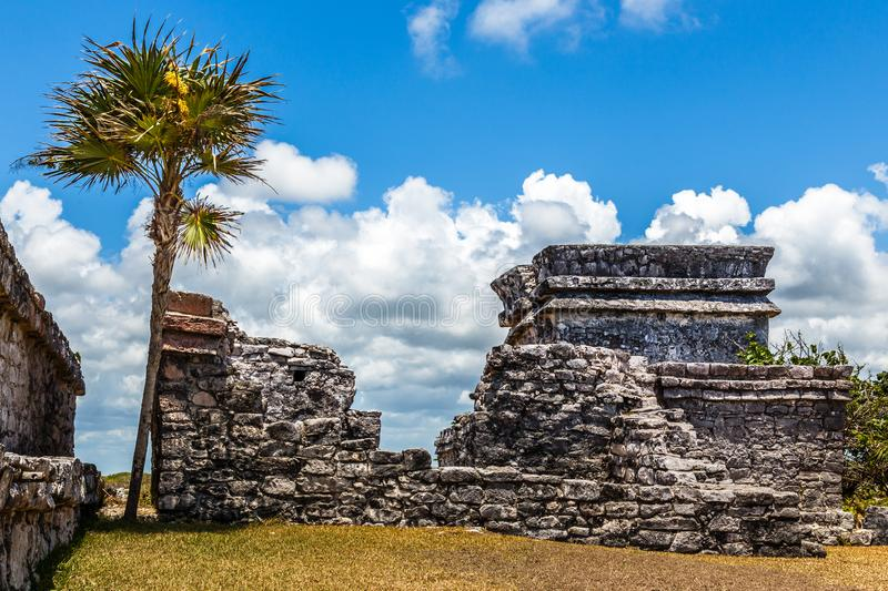 Old ruined ancient Mayan house with palm tree and blue sky, Tulum archaeological site, Yucatan peninsula, Mexico royalty free stock photo