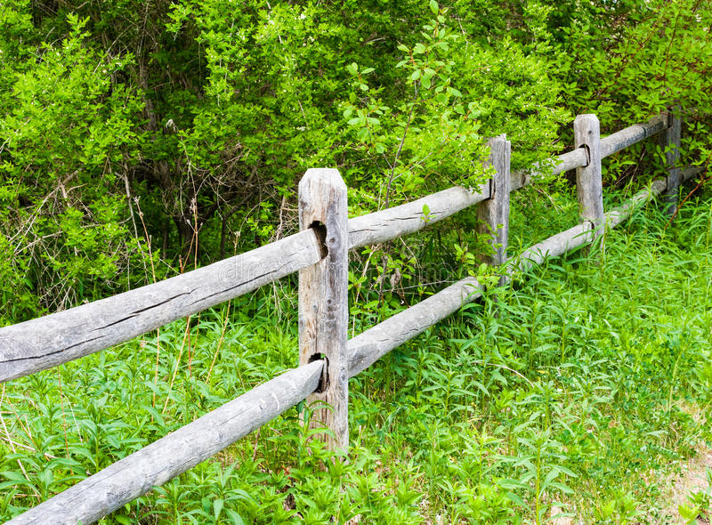 Old rural wood fence in overgrown bushes stock photo