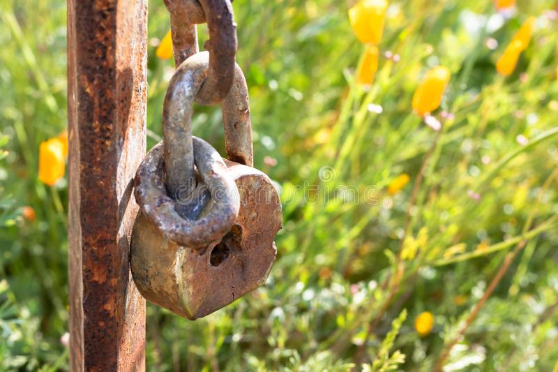 Old rusted lock closeup hanging on rusted post against background of California wildflower meadow field, orange yelow poppies royalty free stock photo
