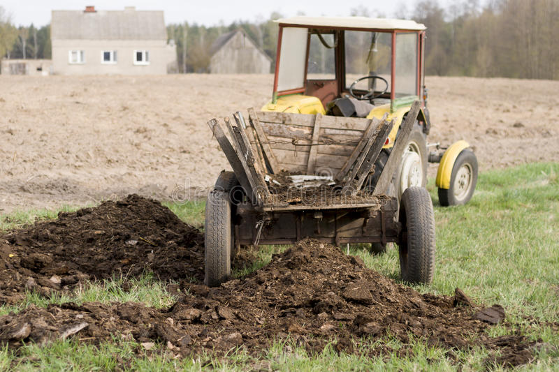 Old Rustic Tractor Delivering Manure. royalty free stock photo