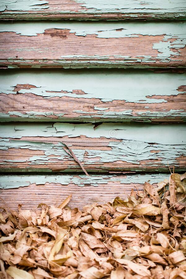 Old rustic wooden antique window or door shutter. Or blinds and dry autumn, fall leaves as vintage season turquoise background stock photography