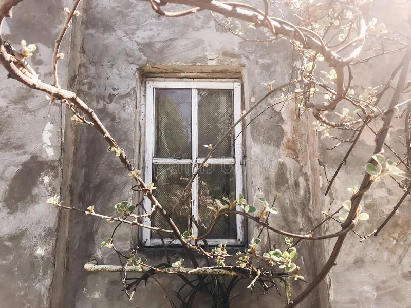 Old rustic wooden window on concrete wall of aged house in sunny botanical garden with branches and fresh new green leaves. Phone royalty free stock photos