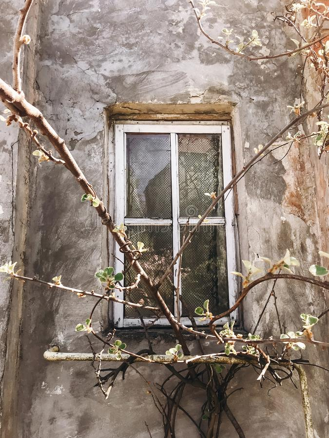 Old rustic wooden window on concrete wall of aged house in sunny botanical garden with branches and fresh new green leaves. Phone royalty free stock photography
