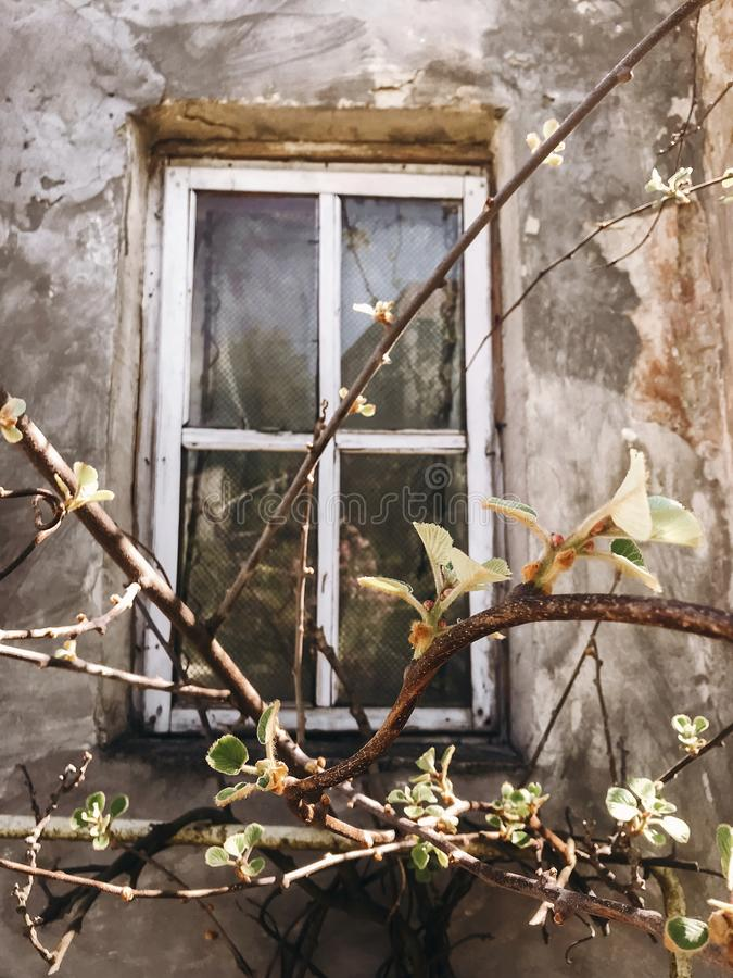 Old rustic wooden window on concrete wall of aged house in sunny botanical garden with branches and fresh new green leaves. Phone stock photo