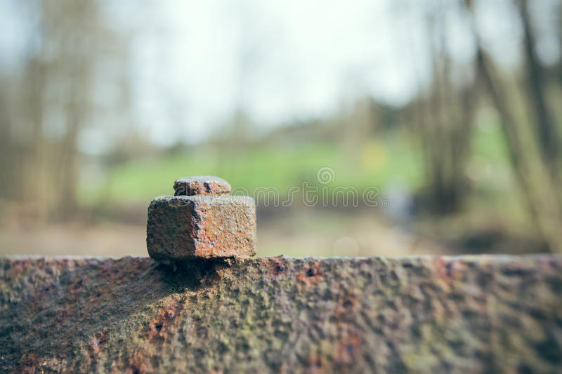 Old rusty bolt. Connection in nature royalty free stock photography