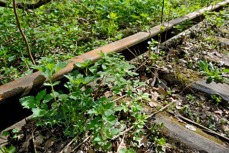 Old rusty rails of an abandoned railway in forest. Old rusty rails of an abandoned railway. Rails overgrown with grass, illuminated by the sun. Concept of royalty free stock photos
