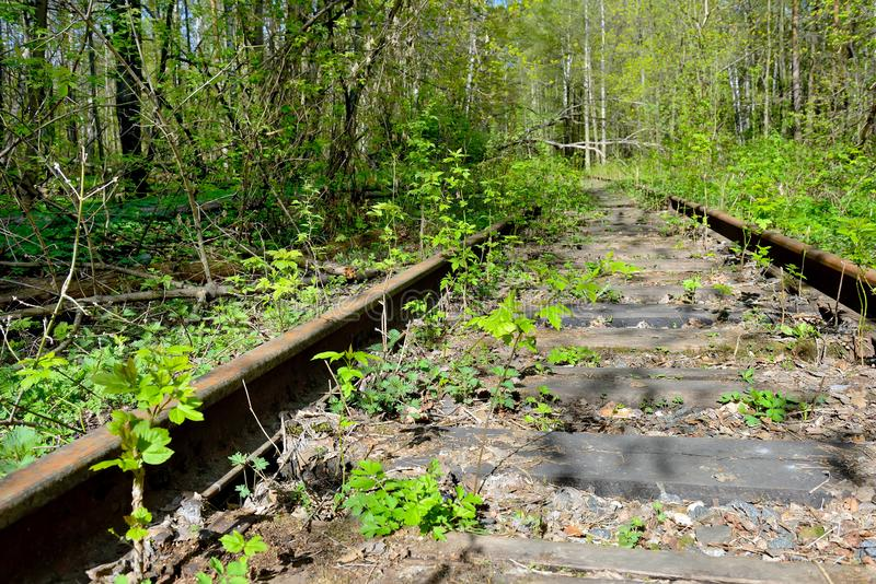 Old rusty rails of an abandoned railway. View into the distance. Rails overgrown with grass, bushes. Concept of abandonment, the victory of nature over royalty free stock image
