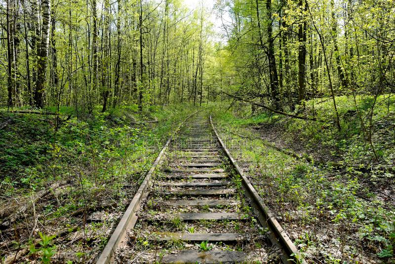 Old rusty rails of an abandoned railway. View into the distance. Rails overgrown with grass, bushes. Concept of abandonment, the victory of nature over stock photo
