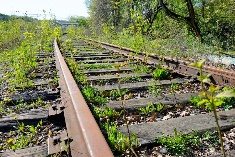 Old rusty rails of an abandoned railway. View into the distance. Rails overgrown with grass, bushes. Concept of abandonment, the victory of nature over royalty free stock photos
