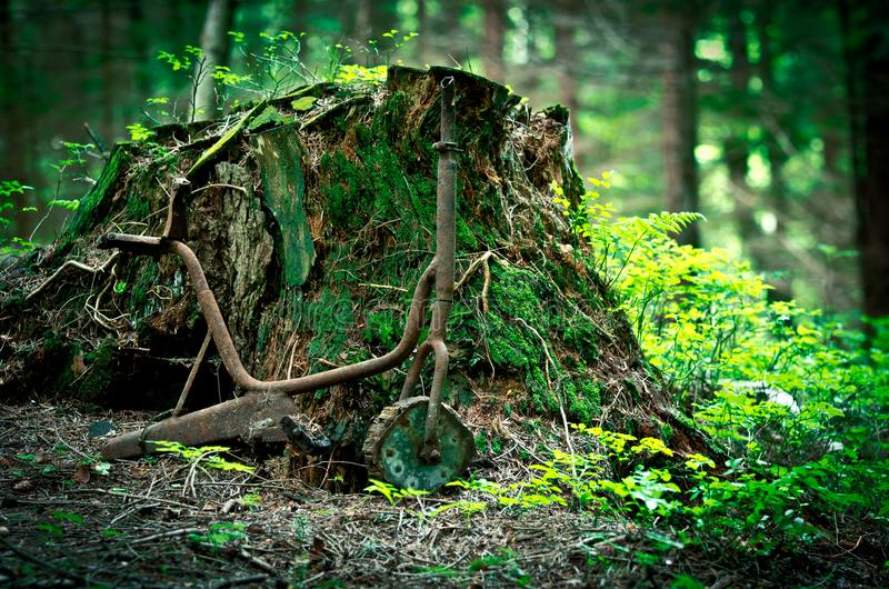 Old rusty tricycle in the forest stock photos