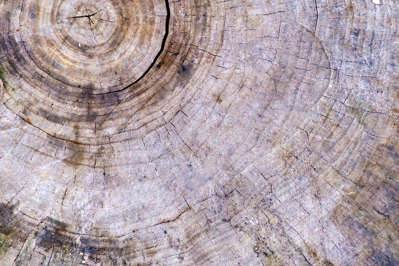 Old saw cut tree annual rings background.  stock photos