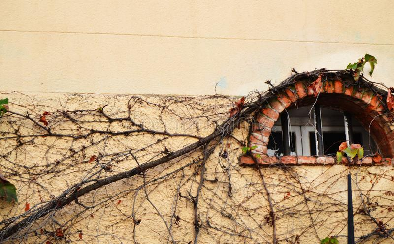 Old semicircular window on the wall of an old building, overgrown with climbing withered plants, free space for text, French style. Vintage, brick, facade royalty free stock photography