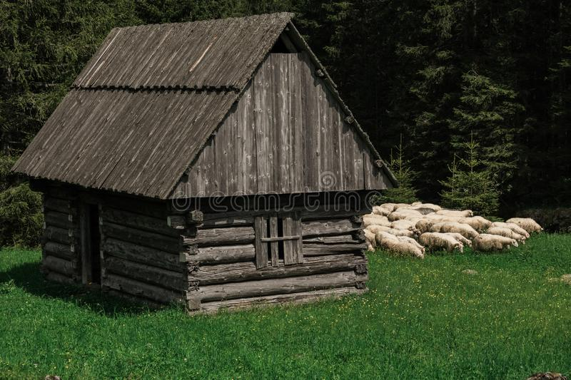 Old sheep house in village stock photo