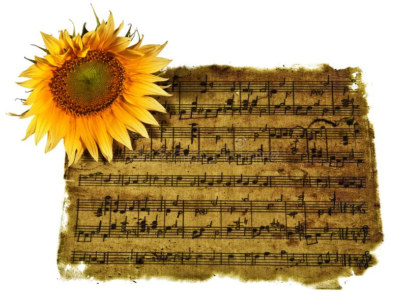 Eternal romantic music. Old sheet music isolated on white background with a sunflower on top stock images
