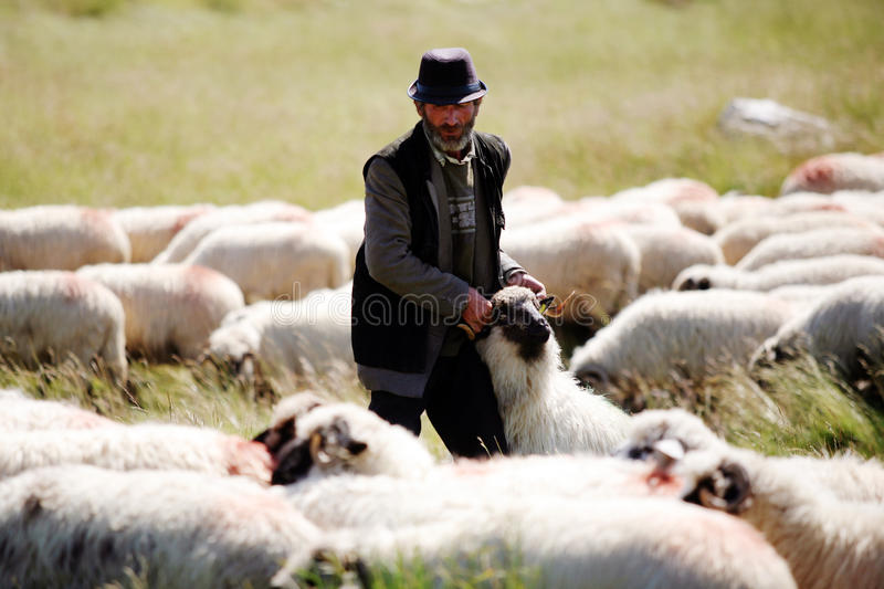 Old shepherd royalty free stock photography