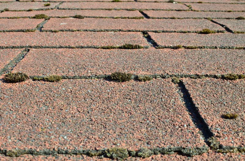 Download Old Shingle Roof Overgrown With Moss Stock Photo - Image: 31721790