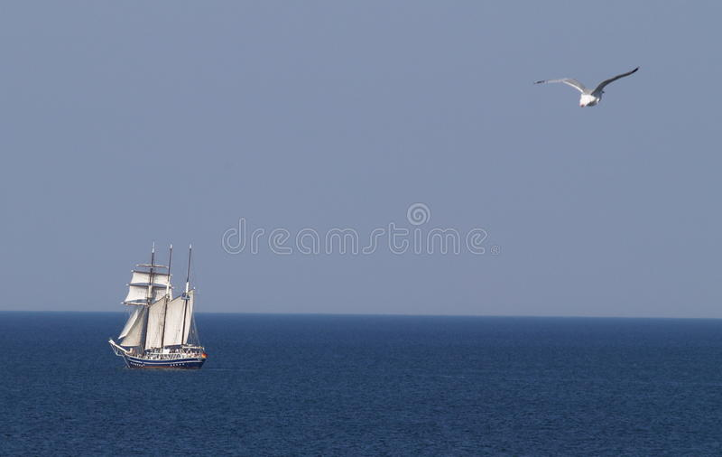 Old ship with seagull stock image