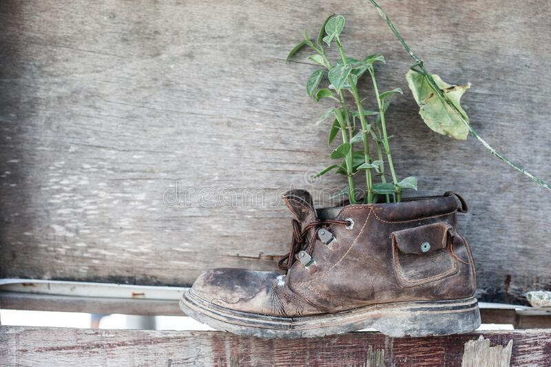 Old shoe with plant on the wooden background royalty free stock photos
