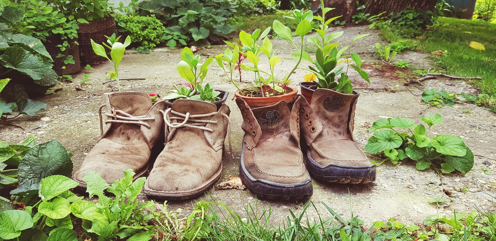 Old shoes plant decoration reuse old stuff creative concept royalty free stock image