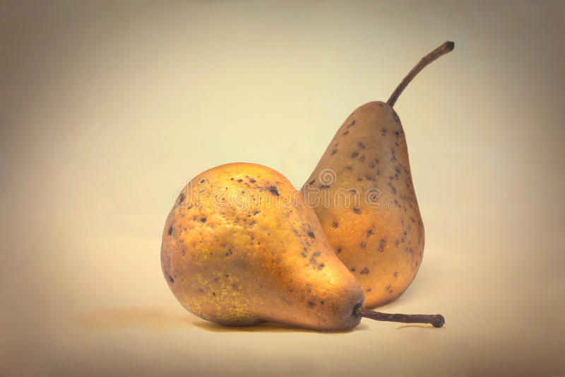 Old shriveled pears. Shriveled pears in vintage effect stock photography
