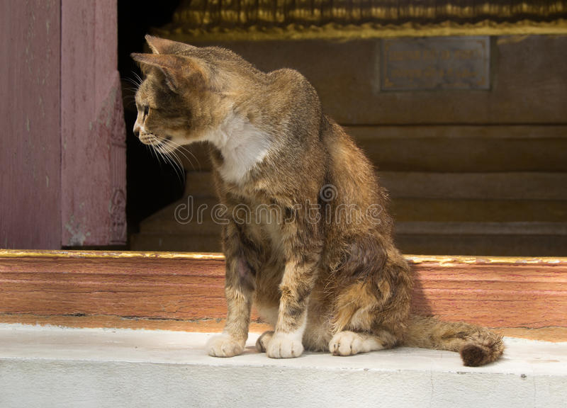 An old and sick cat. An old cat, who is sick and tired and can't take care of his fur any more stock images