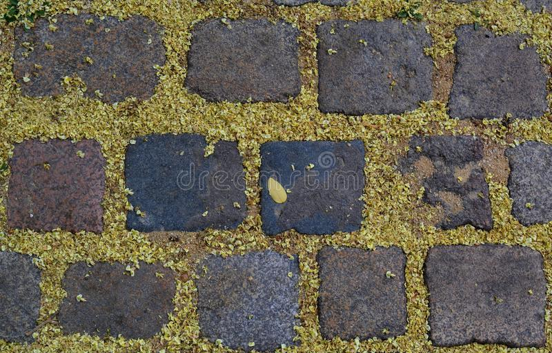 Old sidewalk tiles, strewn with petals stock photography