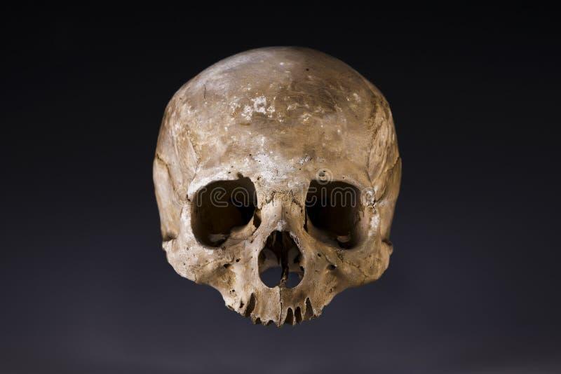 Old skull close-up royalty free stock photo