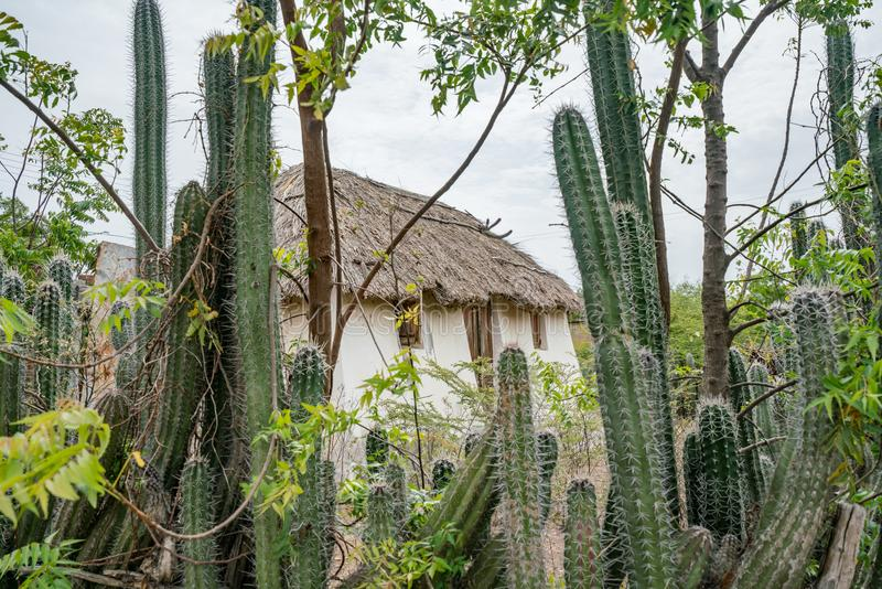 An old Slave hut - cactus fence Curacao Views royalty free stock photos