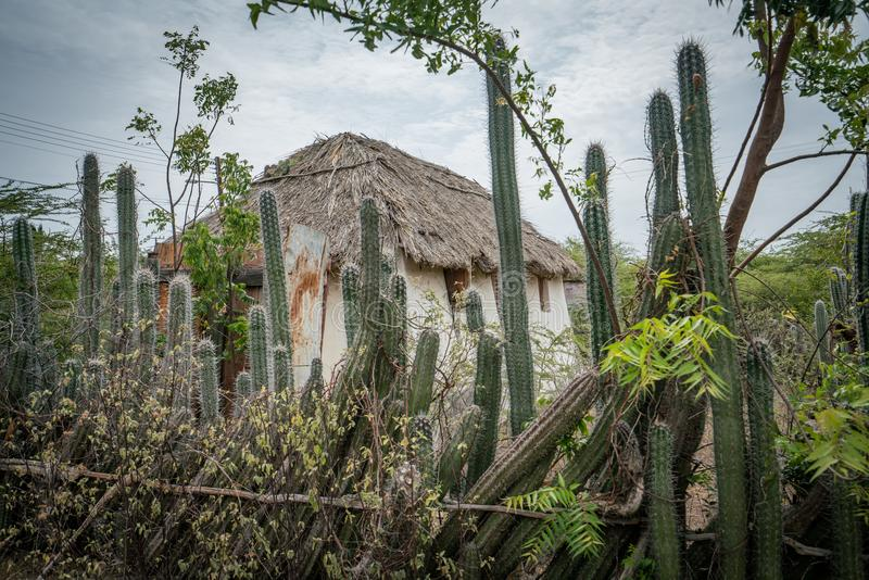 An old Slave hut - cactus fence Curacao Views stock images