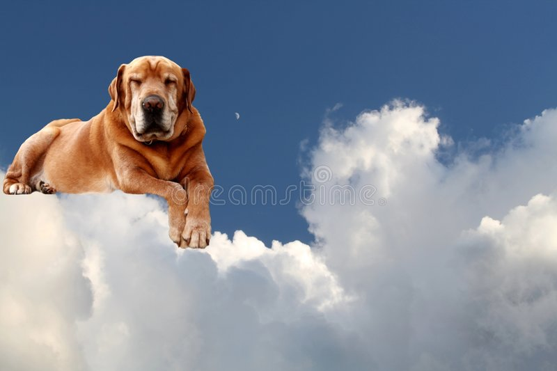 old sleeping dog heaven royalty free stock photo