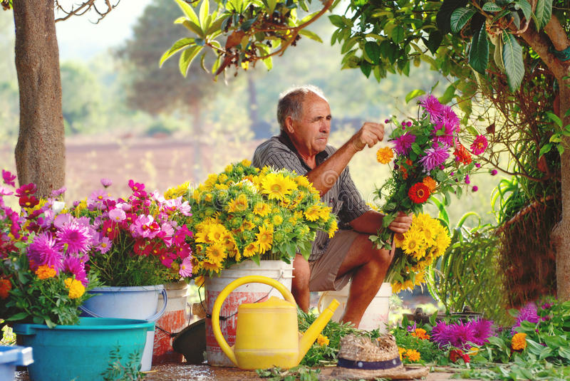 Old Spanish farmer making country flower arrangements. Old Spanish farmer is making flower bouquets in his garden for local market. Soft afternoon light stock photos