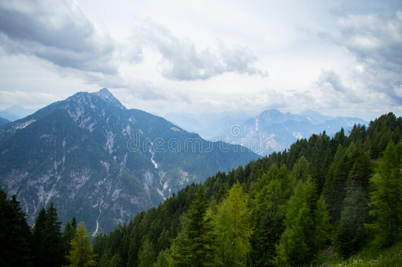 Old spruce on the mountainside stock photography