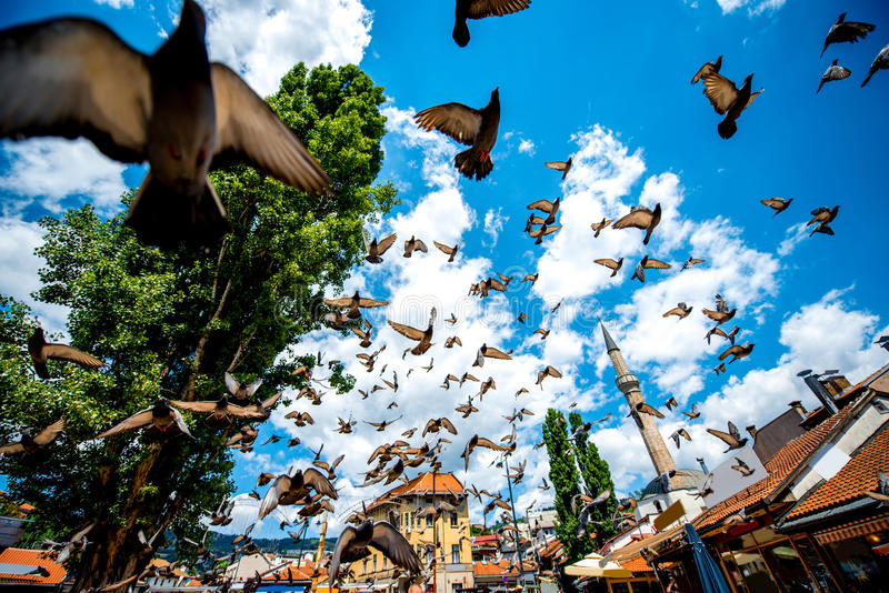 Old square with flying pigeons in Sarajevo royalty free stock images
