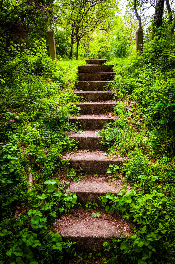 Old stairs and surrounding vegetation at Codorus State Park royalty free stock photos