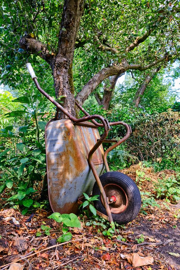 Free Old Steel Rusty Wheelbarrow Leaning Against Tree, With Green Foliage. Royalty Free Stock Photo - 186995875