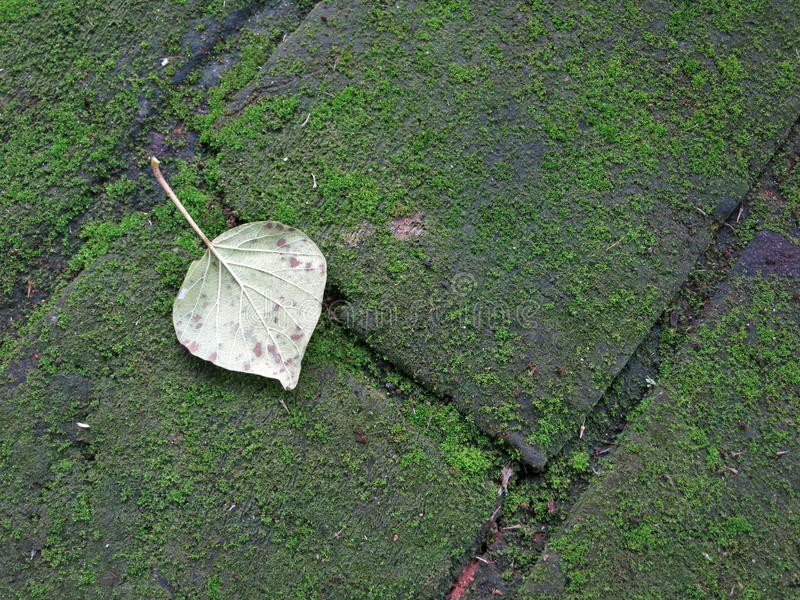 Old stone floor in Srilanka. With live royalty free stock image