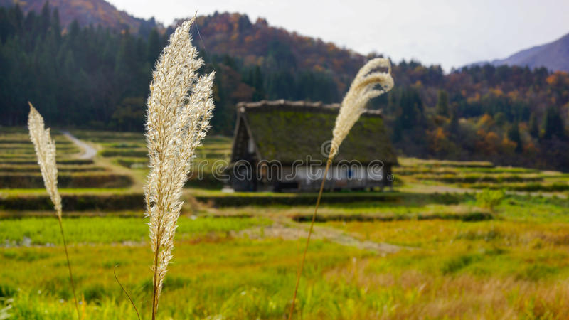 Old stone in japan royalty free stock image