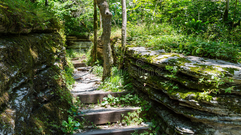 Old stone stairs leading to jungle stock image